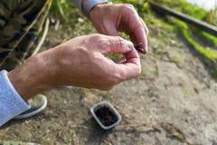 Worm sulle mani del ` una s del pescatore di hooki n di pesca fotografie stock