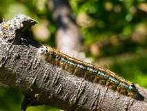 Worm on a tree Royalty Free Stock Photography