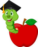 Worm wearing a raduation cap crawling out of an apple Royalty Free Stock Photos