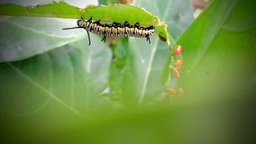 Worm. And green nature click by Xiaomi mobile royalty free stock photos