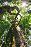Worm's Eye View of Brown Tree during Daytime Stock Photo