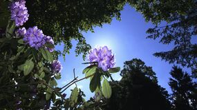 Worm's Eye View of Flowers Beside Trees Under the Sky during Daytime Stock Images