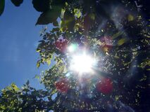 Worm's Eye View of Red and Green Outdoor Plant With Sunlight Painting Stock Photos