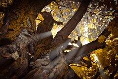 Worm's Eye View of Tree during Daytime Royalty Free Stock Photos