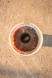 Worm Xylotrupes Gideon Stock Photo