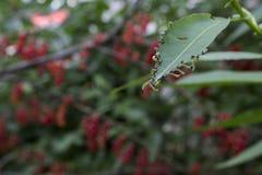 Wormen op bladeren Stock Foto
