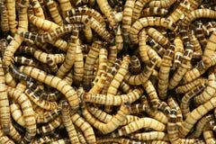 Worms Stock Photos