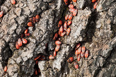 Worms. Trunk of the tree of destructive worms them Stock Photo