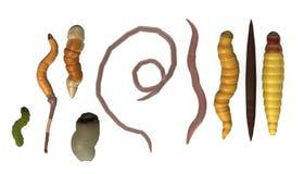 Worms - 9 animals Stock Photos