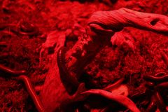 Worms, big and dark.  Stock Image