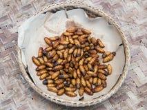 Worms des vers à soie dans un panier image libre de droits