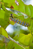Worms eat the leaves. Royalty Free Stock Images