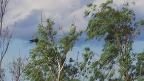 A group of eagles on sky shot