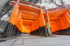 Worms eye view of Torii gates, Fushimi Inari Shrine. Wide angle worms eye view of Torii gates in Fushimi Inari Shrine, Kyoto, Japan Stock Photography