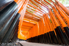 Worms eye view of Torii gates in Fushimi Inari Shrine Royalty Free Stock Image
