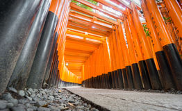 Worms eye view of Torii gates in Fushimi Inari Shrine Royalty Free Stock Photos
