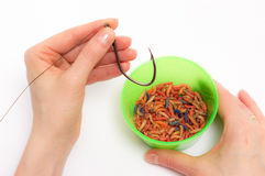 Worms for fishing bait Royalty Free Stock Image