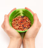 Worms for fishing bait Royalty Free Stock Photos