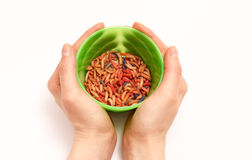 Worms for fishing bait Stock Photography