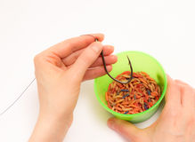 Worms for fishing bait Stock Photo