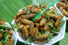 Worms fried in Chiang Khan Loei royalty free stock images