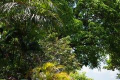 Worms l'eyeview de l'des arbres photographie stock libre de droits