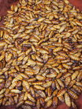 Worms to eat. Maggots for sale at a market in Thailand Stock Photography