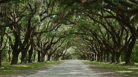Wormsloe Historic Site / Georgia / USA. Live oak trees dripping with Spanish moss, the rural road leading to the Wormsloe Historic Site near Savannah, Chatham stock footage