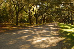 Wormsloe Plantation entrance Stock Image