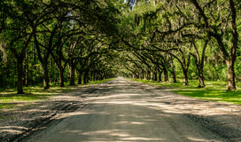 Wormsloe Plantation. The oak alley leading to the Wormsloe Historic Site in Savannah, Georgia royalty free stock image