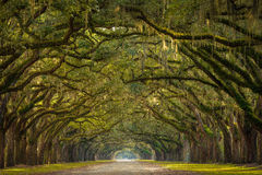 Wormsloe Plantation Oak Trees. A stunning, long path lined with ancient live oak trees draped in spanish moss in the warm, late afternoon near Savannah, Georgia Stock Image