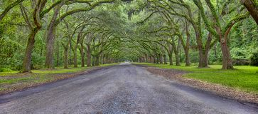 Wormsloe Plantation Panorama, Savannah, Georgia. Panorama of an overgrown oak trees tunnel at the Wormsloe Plantation in Savannah, Georgia royalty free stock image