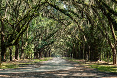 Wormsloe Plantation in Savannah Georgia. Path of oak trees at entrance of wormsloe plantation royalty free stock photography