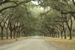 Wormslow plantation Stock Photography