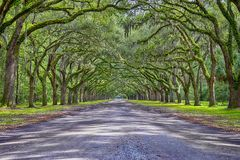 Wormslow Plantation Historic Site Tunnel Royalty Free Stock Photo