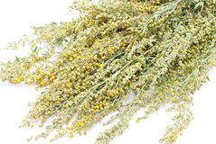 Wormwood. Isolated on white background Royalty Free Stock Photography