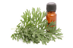 Wormwood Royalty Free Stock Photo
