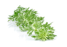 Wormwood grass Royalty Free Stock Photos