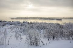 Wormwood under snow on the bank of the Ob River in Novosibirsk o Royalty Free Stock Image