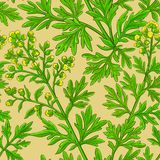 Wormwood vector pattern. On color background vector illustration