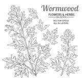 Wormwood vector set. On white background vector illustration