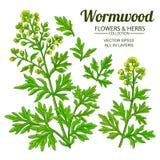 Wormwood vector set. On white background stock illustration