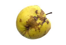 wormy äpple Royaltyfri Foto