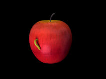 Wormy Apple. An apple affected by worm Royalty Free Stock Photography