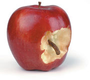 Wormy apple. Apple with a bite out of it showing a worm on white Royalty Free Stock Photo