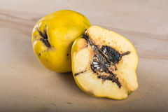 Wormy quince. Quince without pesticides, autumn harvest Royalty Free Stock Image