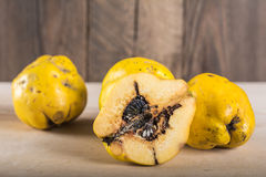 Wormy quince. Quince without pesticides, autumn harvest Royalty Free Stock Photography