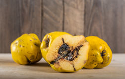 Wormy quince. Quince without pesticides, autumn harvest. Environmentally friendly product Royalty Free Stock Photography