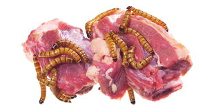 Wormy spoiled beef steak, ugly unhealthy food concept stock footage