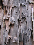 Wormy weathered wood. Old weathered gray wood with tunnels from insects Royalty Free Stock Image